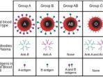 tipe-golongan-darah.jpg