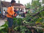 tni-polri-dan-sejumlah-relawan-sigap-memotong-pohon-yang-tumbang-di-bantul.jpg