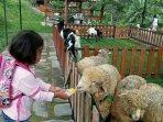 tribunjogjawiki-mini-zoo-jogja-exotarium-education-center.jpg