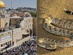 ular-muncul-di-tembok-ratapan-israel_20181108_135711.jpg