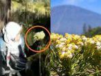video-viral-pendaki-wanita-di-gunung-lawu-petik-bunga-edelweis-diingatkan-tapi-tetap-nekat.jpg