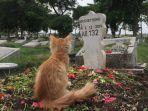 viral-cerita-warganet-tentang-perubahan-sikap-kucing-karena-pemiliknya-yang-sudah-meninggal.jpg