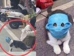 viral-foto-kucing-pakai-masker-di-tengah-wabah-virus-corona-diajak-pemilik-jalan-jalan2.jpg