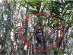 viral-motor-rimbunan-pohon-bambu-di-maguwo-yogyakarta.jpg