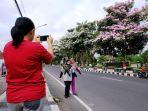 warga-terlihat-berfoto-dengan-latar-belakang-bunga-pohon-tabebuya.jpg
