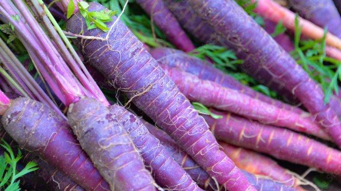 Wortel ungu, simak 5 manfaat konsumsi wortel ungu untuk kesehatan