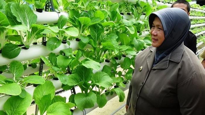 BREAKING NEWS Anggota DPRD Kaltara Asmah Gani Meninggal Dunia di RSUD Tarakan