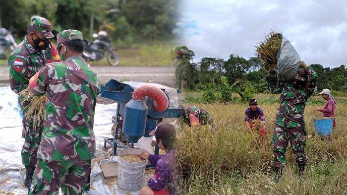 Dukung Program Ketahanan Pangan, TNI Anak Buah Marsekal Hadi Tjahjanto di Malinau Bantu Petani