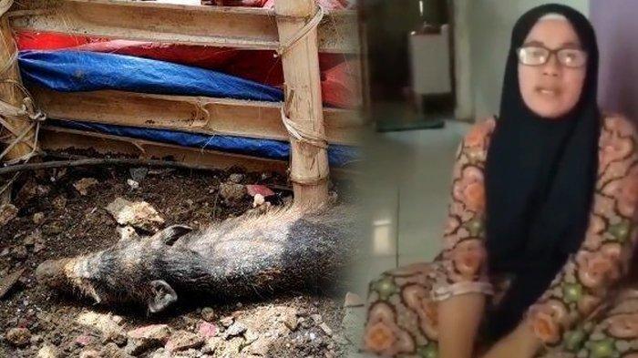 Bu Wati yang viral tuding tetangganya pakai pesugihan terkait heboh isu babi ngepet. (Kolase TribunKaltara.com / TribunJakarta/Dwi Putra Kesuma dan Twitter)