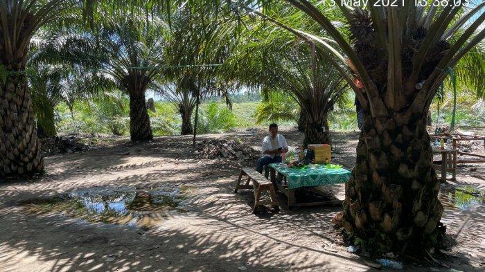 Polres Nunukan lakukan penggerebekan arena perjudian sabung ayam di tengah perkebunan kelapa sawit, Sei Lancang, Kelurahan Tanjung Harapan, Kecamatan Nunukan Selatan, Kamis (13/05/2021), siang