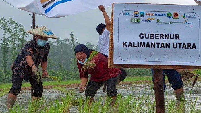 Nilai Tukar Petani Kalimantan Utara Naik 0,52 Persen