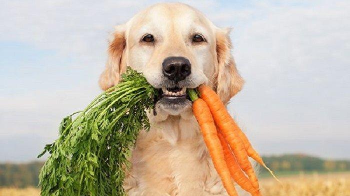 7 Ragam Makanan Manusia yang Boleh Dikonsumsi Anjing Peliharaan, Ada Wortel hingga Brokoli