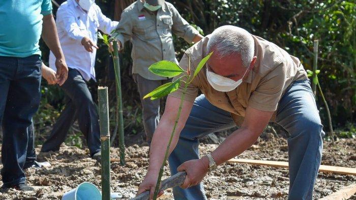 Gubernur Kaltim Ikut Menanam Mangrove di Delta Mahakam, Isran Noor: Ini Cangkulan Anak Sangkulirang