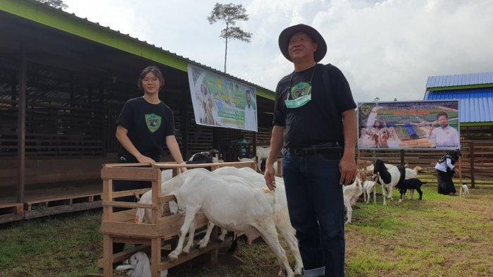 Pemiliki Peternak Kambing Boer Mandiri Farm Bulungan Cheito Karno (Ashe) Dan anaknya Wynne Tricia Kie.