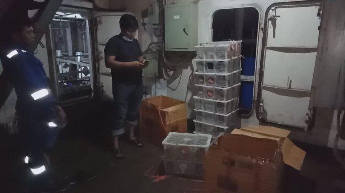 Penyelundupan 359 Burung ke Pare Pare Gagal! Pelaku Sempat Kelabui Karantina Pertanian Balikpapan
