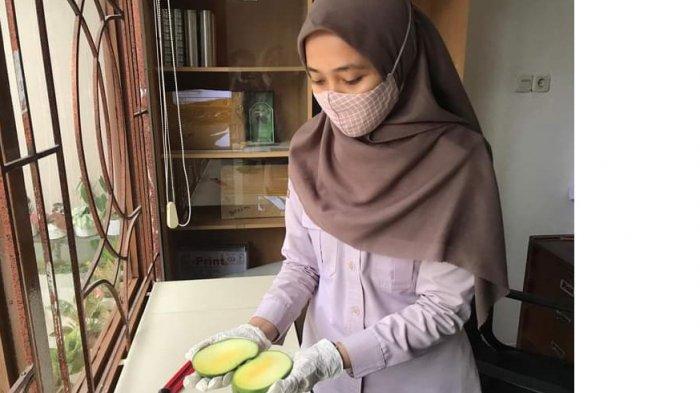 Petugas Karantina Pertanian memeriksa buah mangga sebelum diekspor. Dukung Gratieks Karantina Pertanian Tarakan Wilke Nunukan fasilitasi ekspor buah ke Malaysia hingga 7.110 kilogram pada 12 April lalu.
