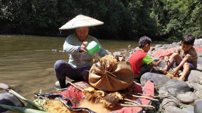 Kearifan Lokal Masyarakat Dayak Punan di Malinau Selatan Hulu, Andalkan Hutan Jaga Ketahanan Pangan