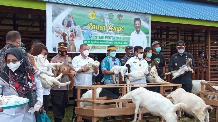 Kunjungi Peternakan Kambing Boer di Bulungan, Berikut Pesan Menteri Pertanian RI Syahrul Yasin Limpo