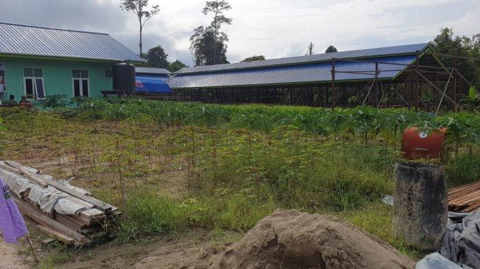 Salah satu kawasan Lahan pangan yang ada di Kabupaten Bulungan.