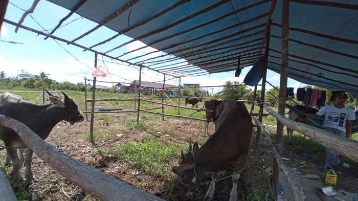 Pedagang Sapi Bustan Arifai saat ditemui di lapak dagangannya di Gang Lestari, Jalan Sengkawit, Tanjung Selor, Minggu (18/7/2021), Bustan mengakui penjualan sapi lesu imbas Pandemi Covid-19.