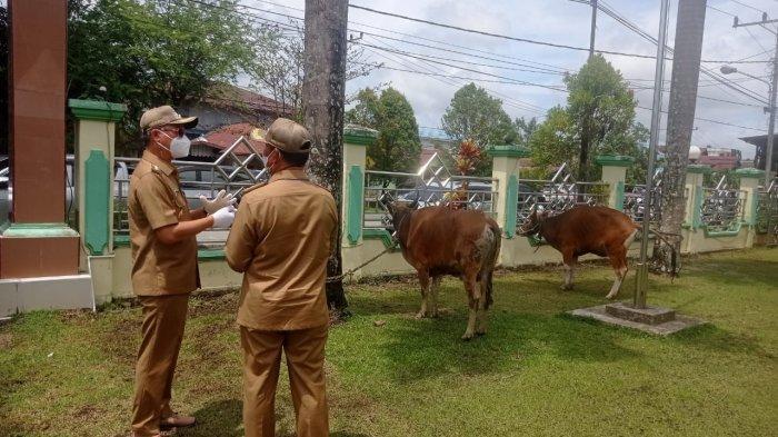 Pemkab Malinau Bagikan 32 Ekor Hewan Kurban, PHBI: Termasuk Desa Terjauh di Malinau Selatan Hulu