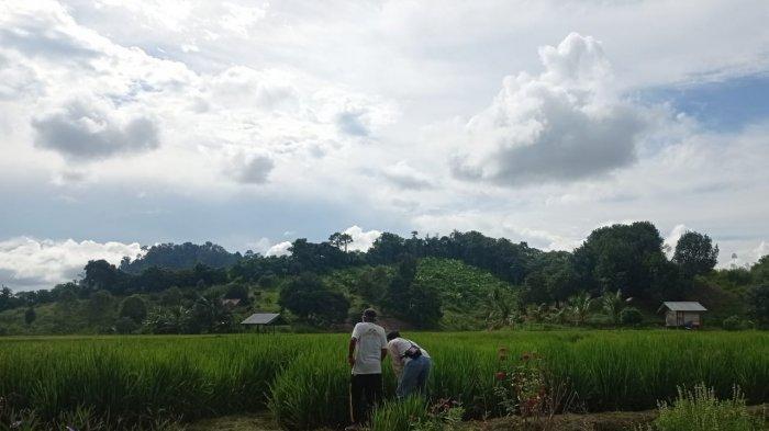 Mau Dapat Pupuk Bersubsidi dari Dinas Pertanian Malinau, Ini  Syarat yang Dipenuhi Kelompok Tani