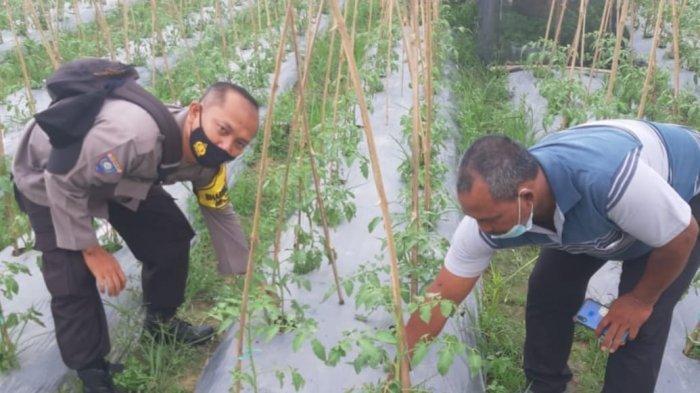 Manfaatkan Lahan Tidur di Masa Pandemi Covid-19, Polisi Polsek Sungai Pinang Ajak Warga Tanam Sayur