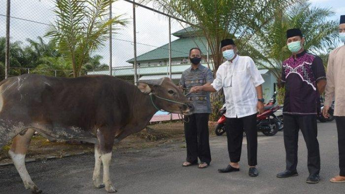 Ketua DPD LDII Kota Tarakan Bambang Wijanarto menyerahan sapi kurban kepada Dandim 0907 Tarakan Letkol Inf Eko Antoni Chandra Lestianto.