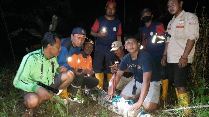 Dipancing Pakai Makanan yang Diikat Tali, Buaya Berukuran 3 Meter di Samarinda Berhasil Ditangkap