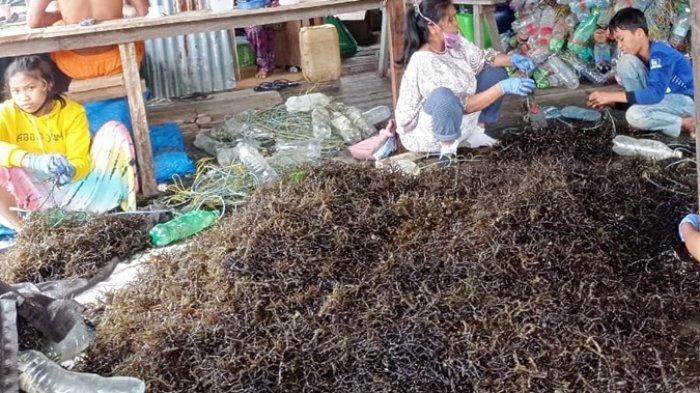 Dinas Kelautan dan Perikanan Nunukan Beberkan Penyebab Menurunnya Kualitas Rumput Laut Petani