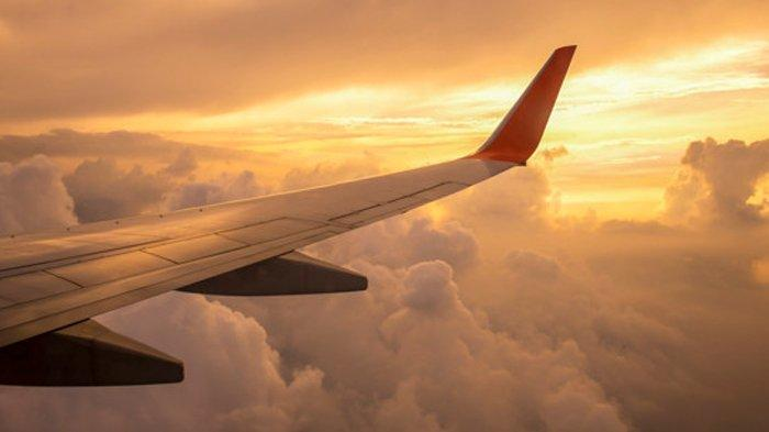 Insiden Tragis Pesawat Jatuh, Presiden dan 4 Pemain Palmas FR Klub Liga Brasil Tewas
