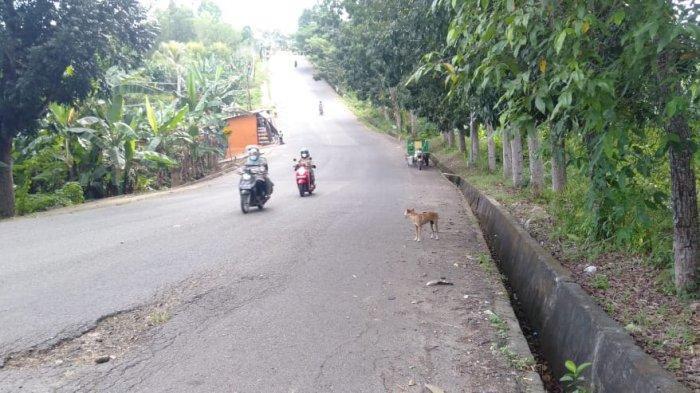 Kawanan Anjing Liar Resahkan Warga Sei Bilal Kabupaten Nunukan, Korban Patah Tulang Hingga Meninggal