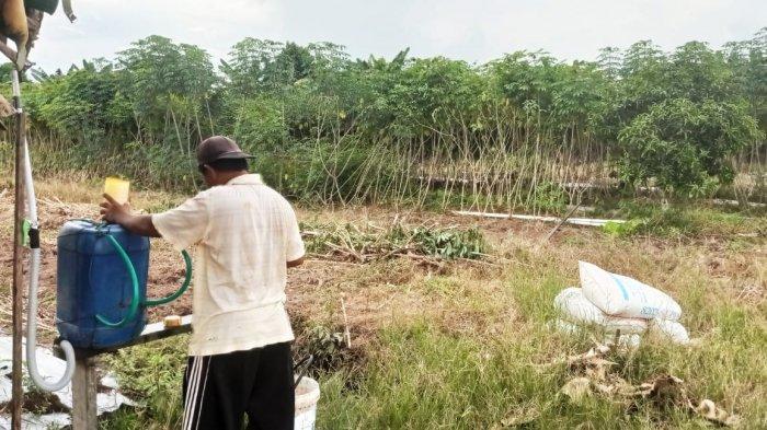 Seorang petani tengah mengaplikasikan pupuk organik cair (POC) di lahan pertanian miliknya, di Desa Malinau Hilir, Kecamatan Malinau Kota, Kabupaten Malinau, Provinsi Kalimantan Utara (TribunKaltara.com/Mohammad Supri)