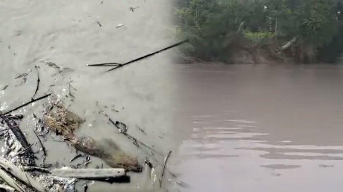 Sungai Malinau tercemar, berubah warna menjadi abu-abu, diduga akibat limbah aktivitas tambang batubara. (Kolase TribunKaltara.com / Istimewa)