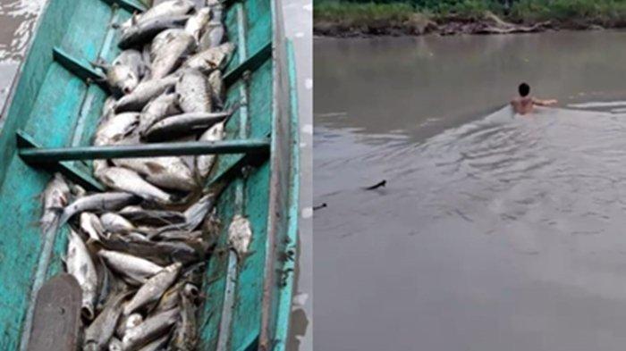 Unggahan Pengguna Media Sosial terkait kondisi air sungai di Kabupaten Malinau. Tampa ikan-ikan di Sungai Malinau mati dan air sungai keruh.