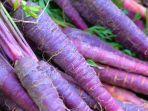 5-manfaat-wortel-ungu.jpg