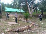 judi-sabung-ayam-di-perbatasan-ri-malaysia-desa-seberang-nunukan.jpg