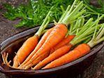 manfaat-wortel-untuk-ibu-hamil.jpg