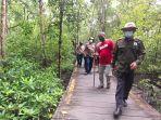 mangrove-di-tarakan.jpg