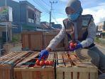 pemeriksaan-fisik-buah-tomat-oleh-pejabat-bkp-tarakan-wilker-sebatik.jpg