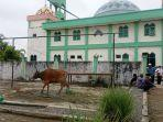 pengurus-masjid-menunggu-pendistribusian-sapi-kurban-di-masjid-agung-darul-jalal.jpg