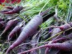 purple-carrot.jpg