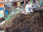rumput-laut-petani-nunukan-13102020_2.jpg