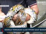 ular-sanca.jpg