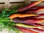 wortel-ungu-2.jpg