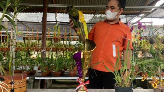 Anggrek Ekor Tikus Spesies Anggrek Langka Tanaman Khas Kalimantan Tengah