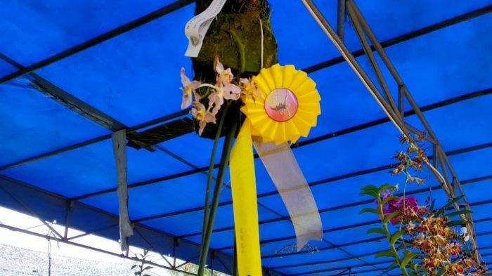Anggrek LangkaEkor Tikus Kalteng Maskot Kota Palangkaraya Juara Kategori Terbaik PON XX Papua
