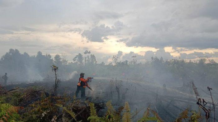 Kebakaran Lahan Gambut Satu Hektare Palangkaraya, Pemadaman Dilakukan dari Udara
