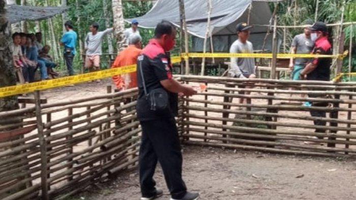 Sabung Ayam di Murungraya Membawa Maut, Barok Tewas di Ujung Belati