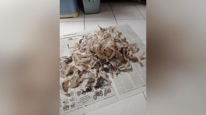 BPPRD Palangkaraya Teken Mou dengan Kejari, Genjot Penerimaan Pajak Usaha Sarang Burung Walet